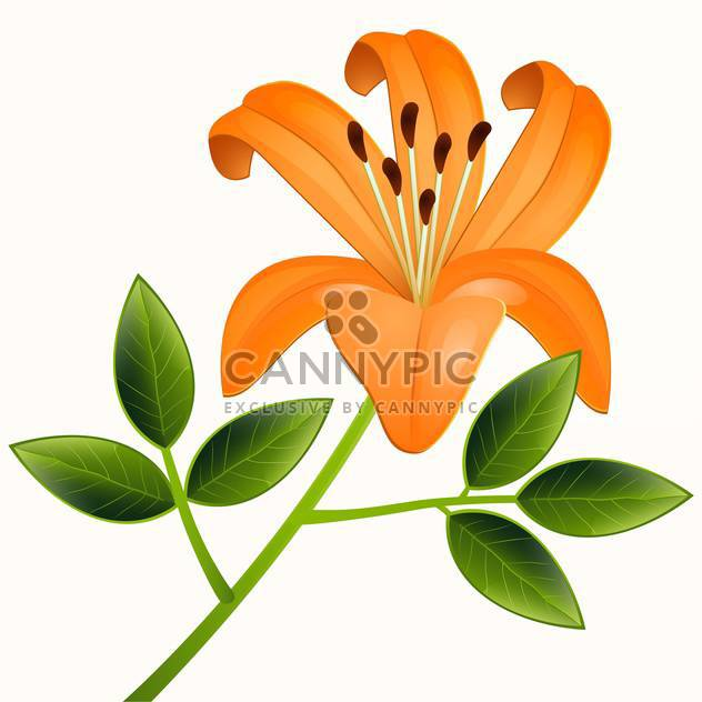 beautiful vector illustration of orange lily flower with green leaves on beige background - Free vector #126296