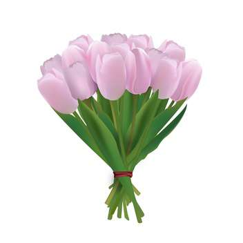 vector bouquet of pink tulips - vector gratuit #134816